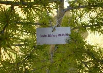 HÜRKUŞ Ormanı / Sevim Hürkuş Maxson adına